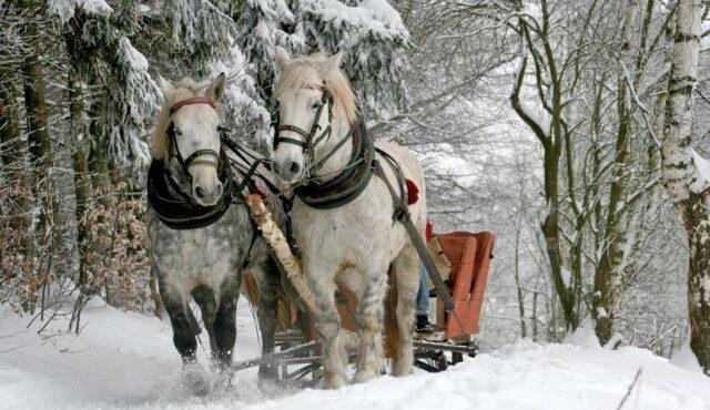 Pferdeschlittenfahrt in Rohrmoos & Stadtführung Schladming 01.12.2021